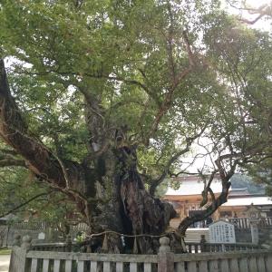 樹齢2600年の神木