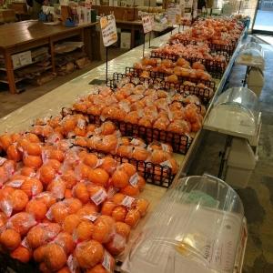 スーパーのみかん陳列
